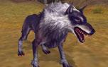 图片: 1.狼.jpg