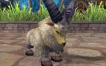 图片: 3.羊.jpg